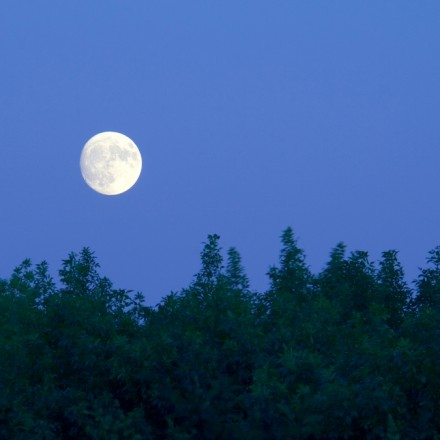 a stark white full moon with amazing detail hovers over a forest at dusk.