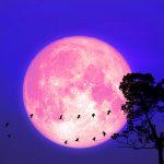 Full Moon Update 8-22-21